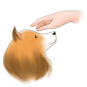 一隻手從狗狗正面伸過去摸 拷貝