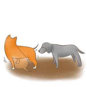 一隻狗站著靠近嗅聞,另一隻由站著變坐著_改 拷貝