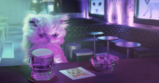 小貓的奇幻冒險3