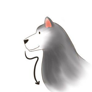 狗狗上半身側面(箭頭從下巴→順著畫到胸口處)_改 拷貝