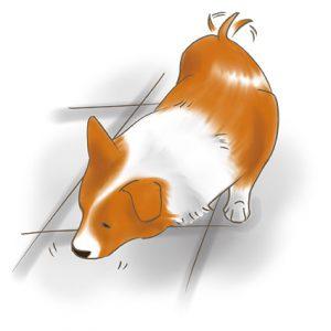 狗狗聞地板 拷貝