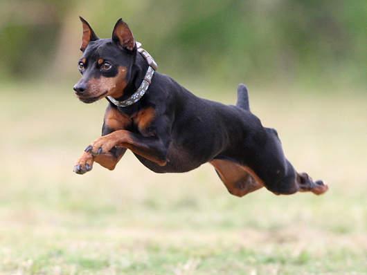 飛行狗狗3