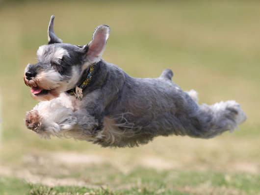 飛行狗狗5