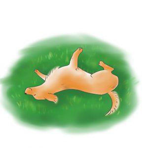 狗狗在地上打滾 拷貝