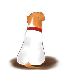 狗狗坐下背影 拷貝