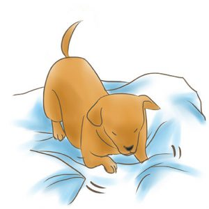 狗狗挖掘床鋪 拷貝