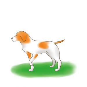 狗狗縮起單隻前腳_改 拷貝