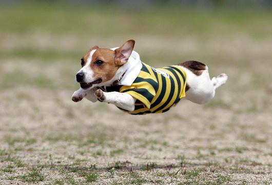 飛行狗狗1
