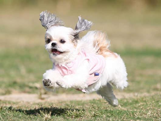 飛行狗狗2