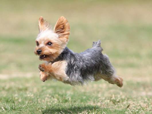 飛行狗狗4