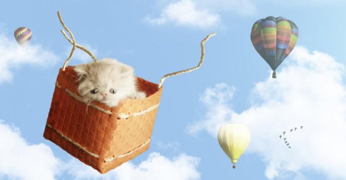 小貓的奇幻冒險1