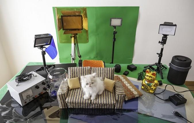小貓的奇幻冒險5