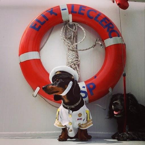 crusoe_dachshund (2)