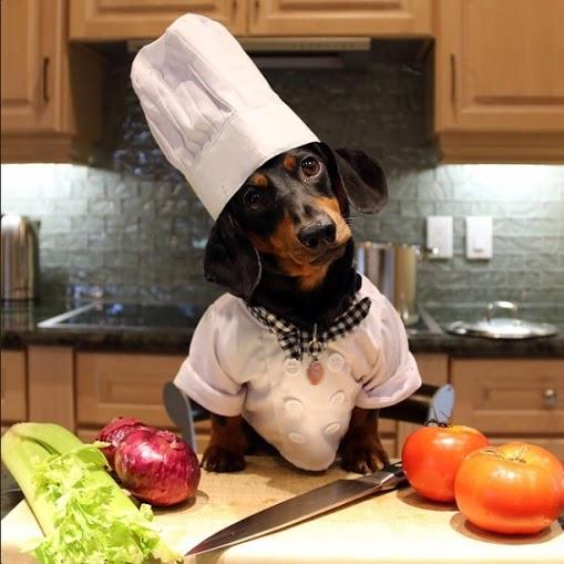 crusoe_dachshund (3)