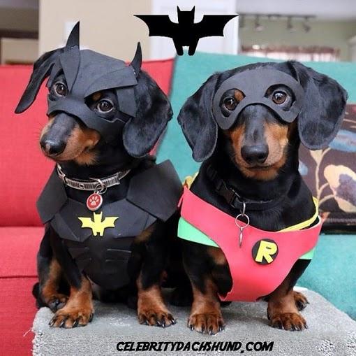 crusoe_dachshund (4)