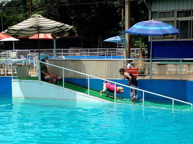Gooddog 妙狗寵物游泳池