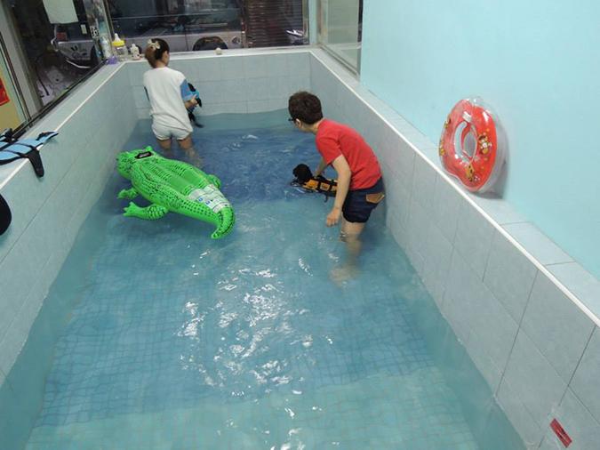 全台寵物游泳池大搜查-桑尼2