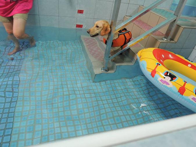 全台寵物游泳池大搜查-桑尼3