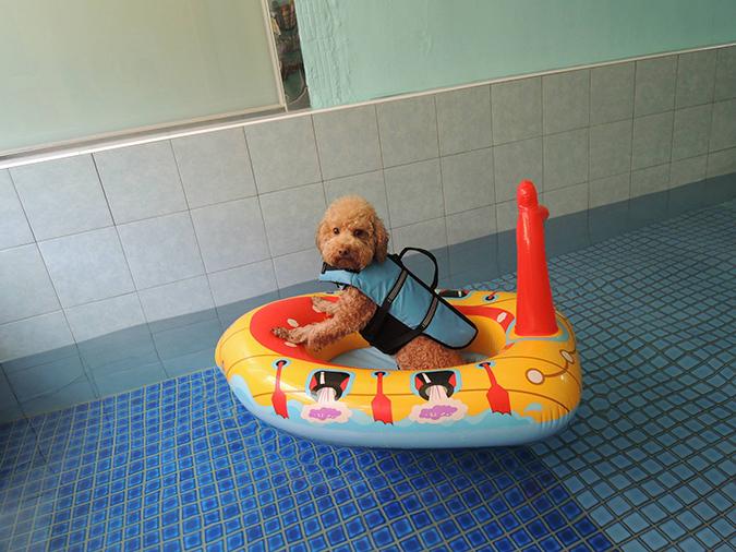 全台寵物游泳池大搜查-桑尼4