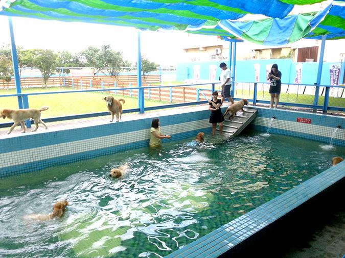 全台寵物游泳池大搜查-鹿和1