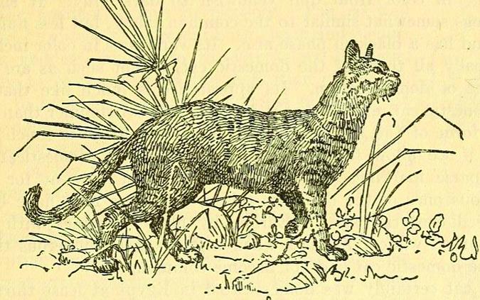 寵物間的行為演化-2.bp.blogspot.com