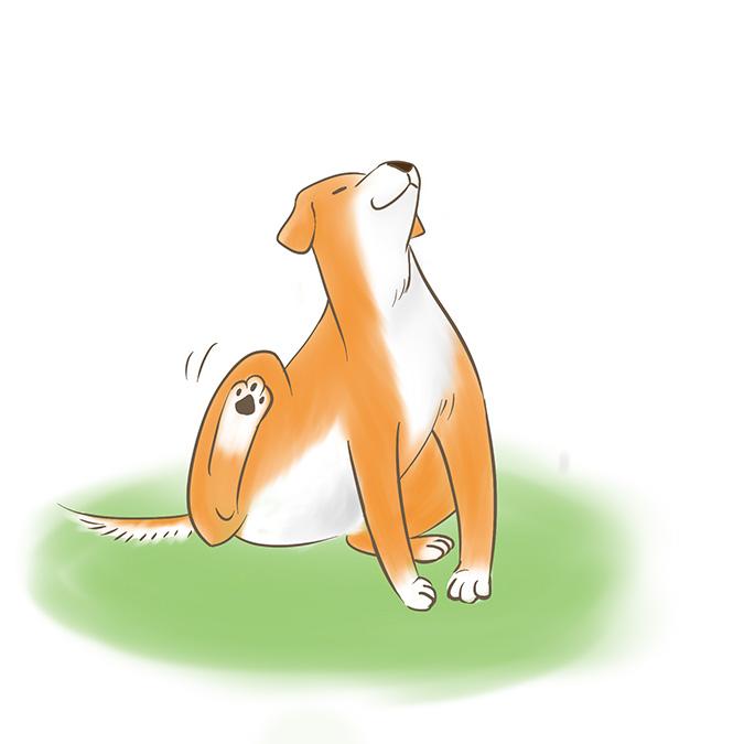 狗狗用後腳搔癢