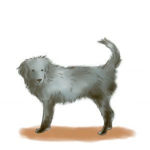 狗狗蓬頭垢面髒髒的樣子