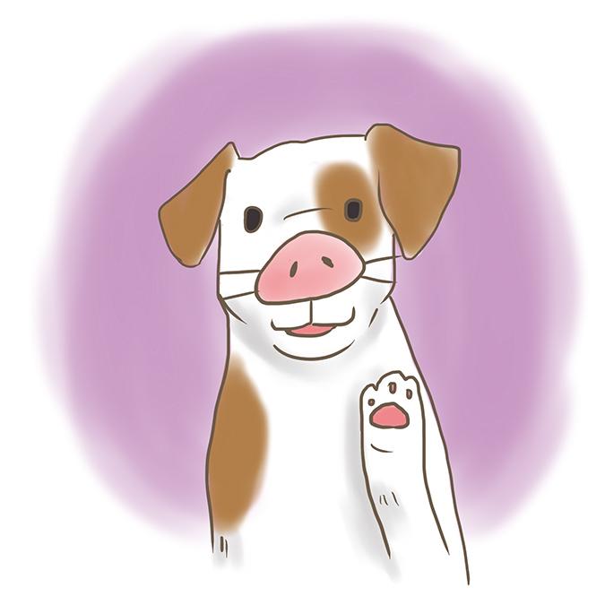 豬鼻子狗狗