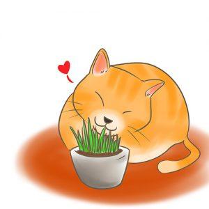 貓咪吃貓草 拷貝