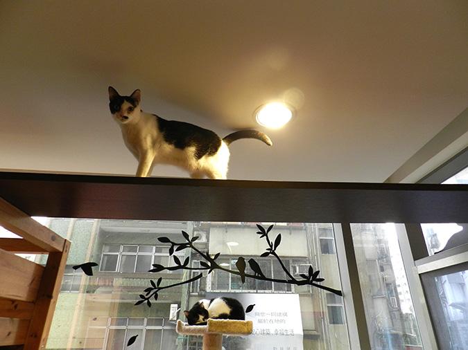 貓咪專屬旅館-發條貓
