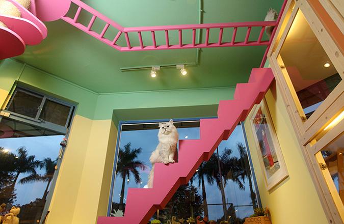 貓咪專屬旅館-貓當家-天梯