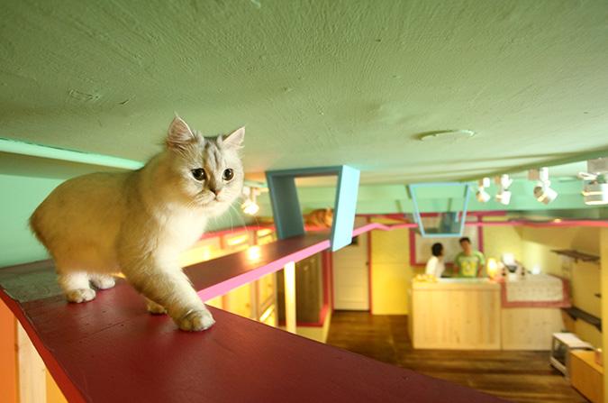 貓咪專屬旅館-貓當家
