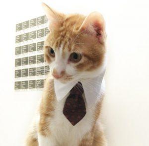 貓咪的禮服