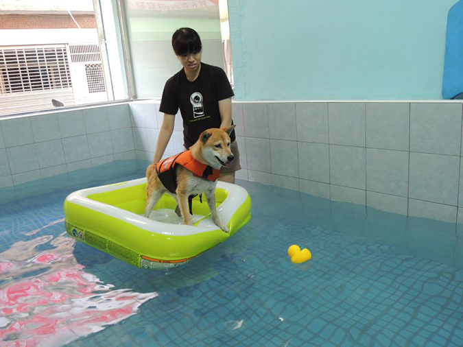 全台寵物游泳池大搜查-桑尼1