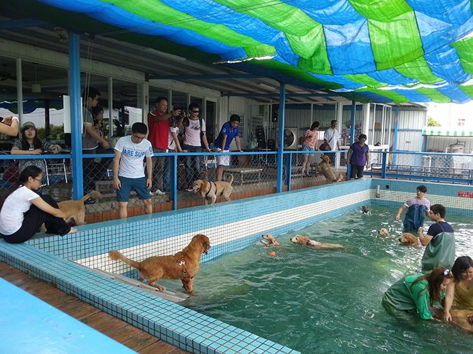 全台寵物游泳池大搜查-鹿和2