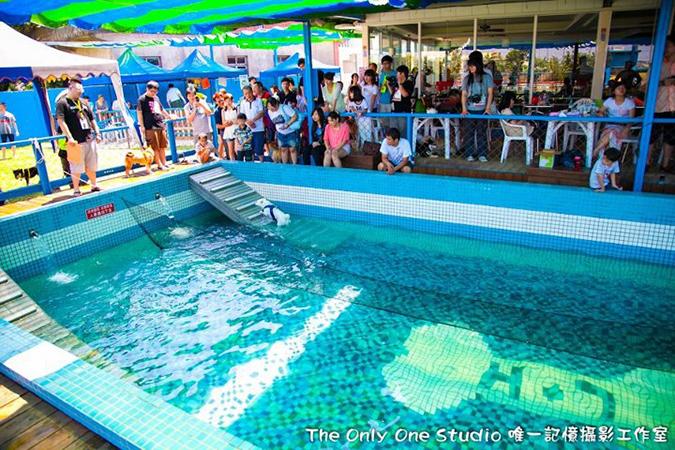 全台寵物游泳池大搜查-鹿和5