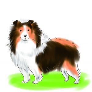 喜樂蒂牧羊犬