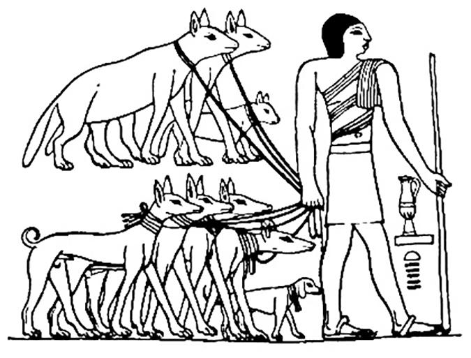 寵物間的行為演化-Tesem_Egyptian_dog