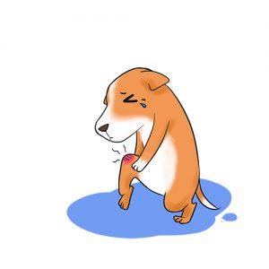 狗狗扶著膝蓋痛