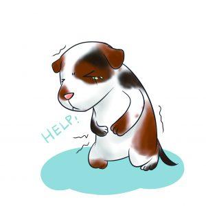 狗狗胃痛抱著肚子很痛苦
