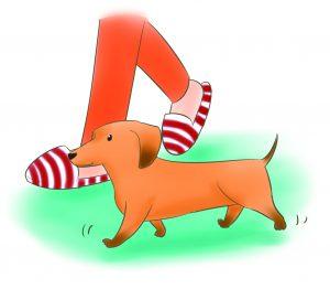 狗狗跟隨腳邊
