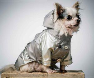 狗狗雙色雨衣