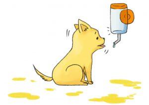 狗-喝水2