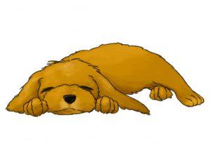 狗-嗜睡2