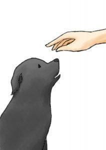 狗-正面伸手