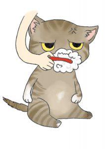 貓咪(刷牙)