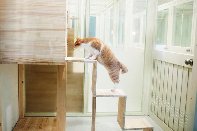 貓咪專屬旅館-貓館-一般房