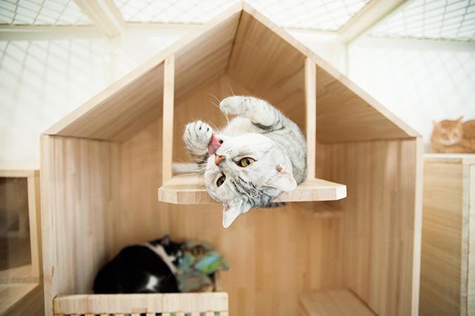貓咪專屬旅館-貓館
