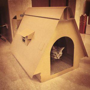 貓豪宅 豪華版