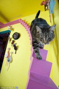 cat-house-1